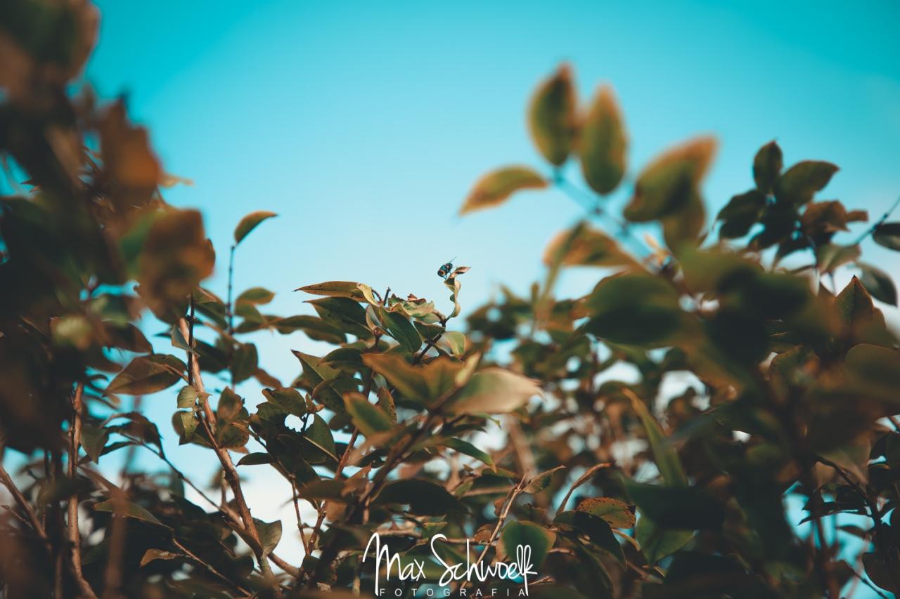 MAX_3511