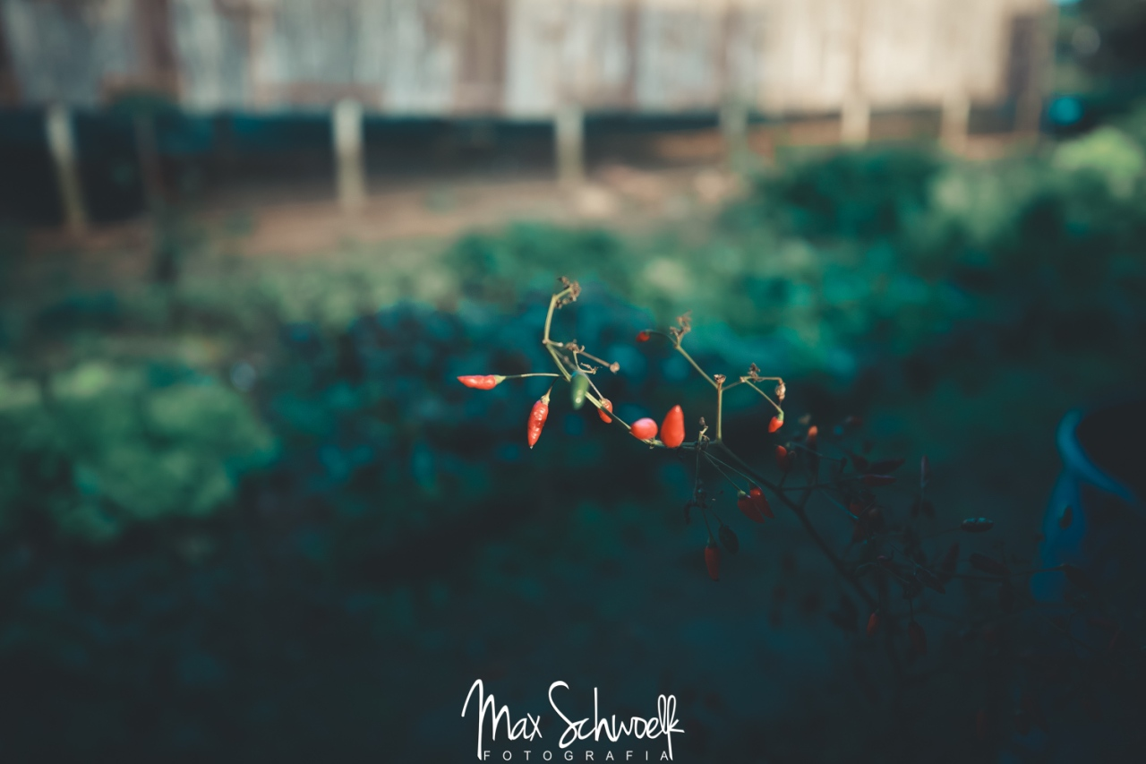 MAX_3651