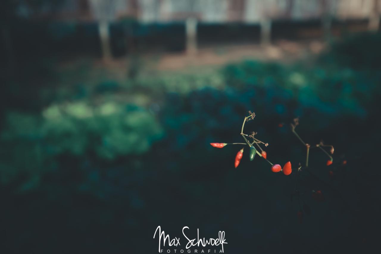 MAX_3652