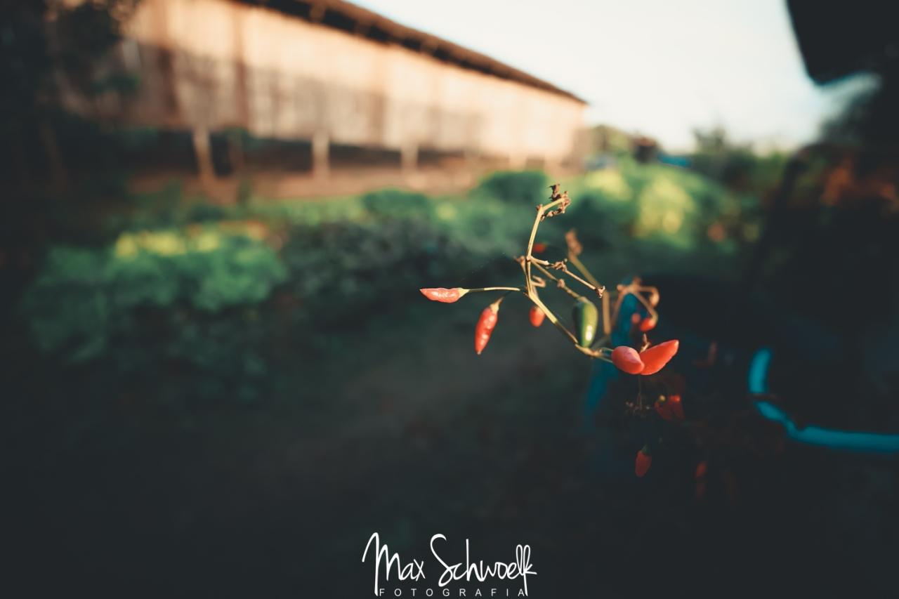 MAX_3653