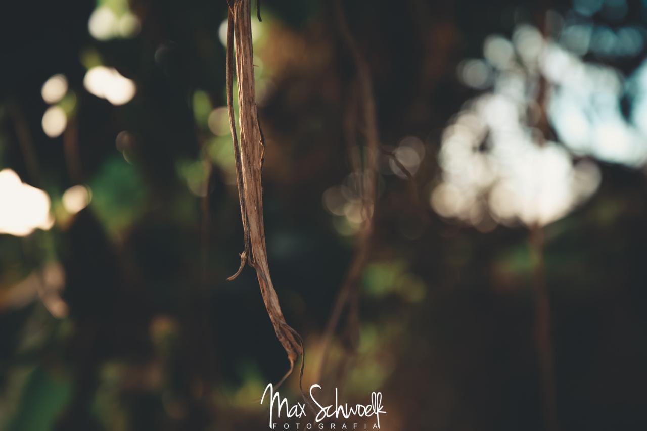 MAX_3705