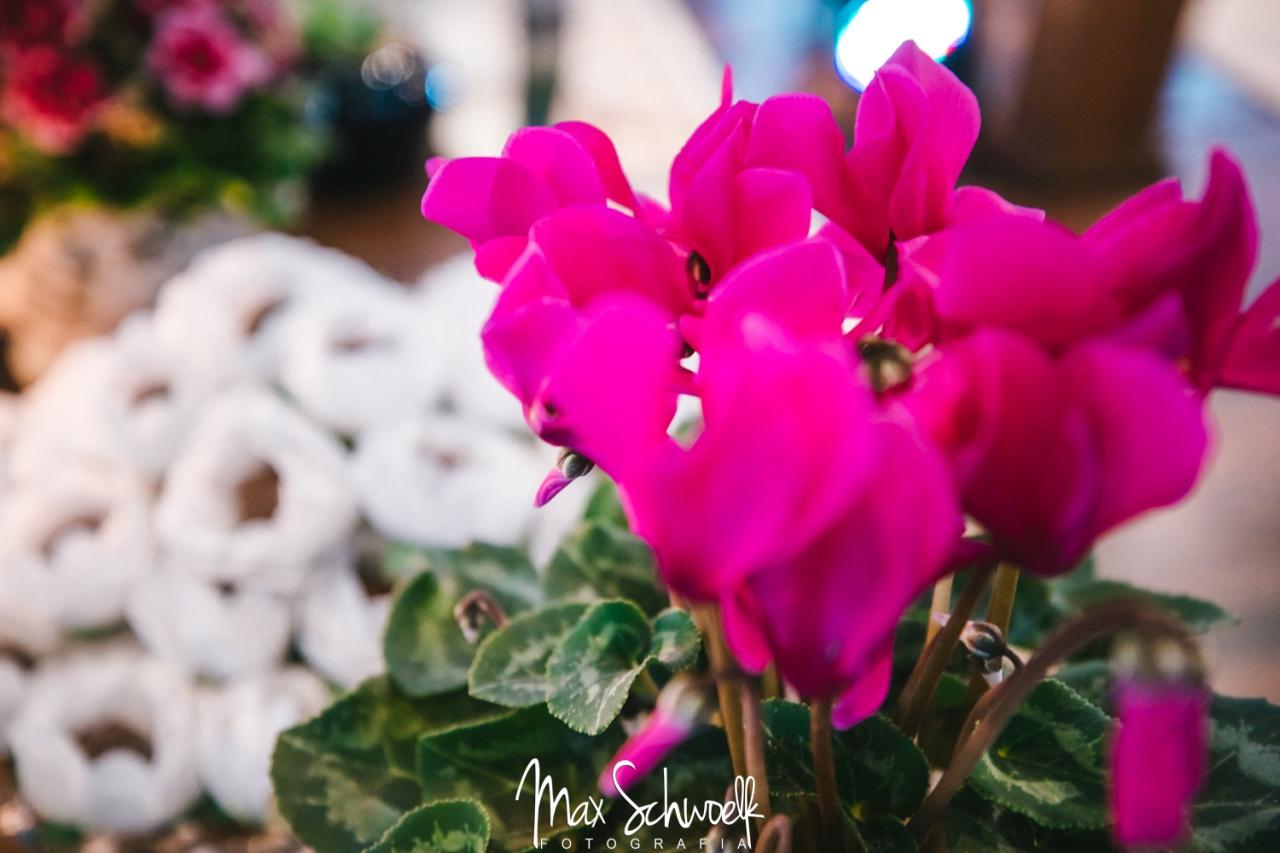 MAX_0283